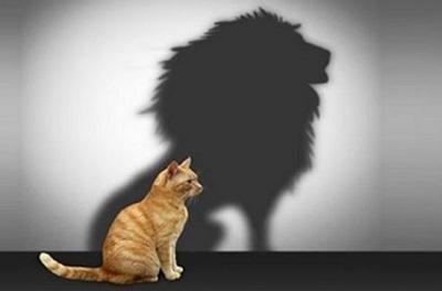 kedi_aslan.jpg